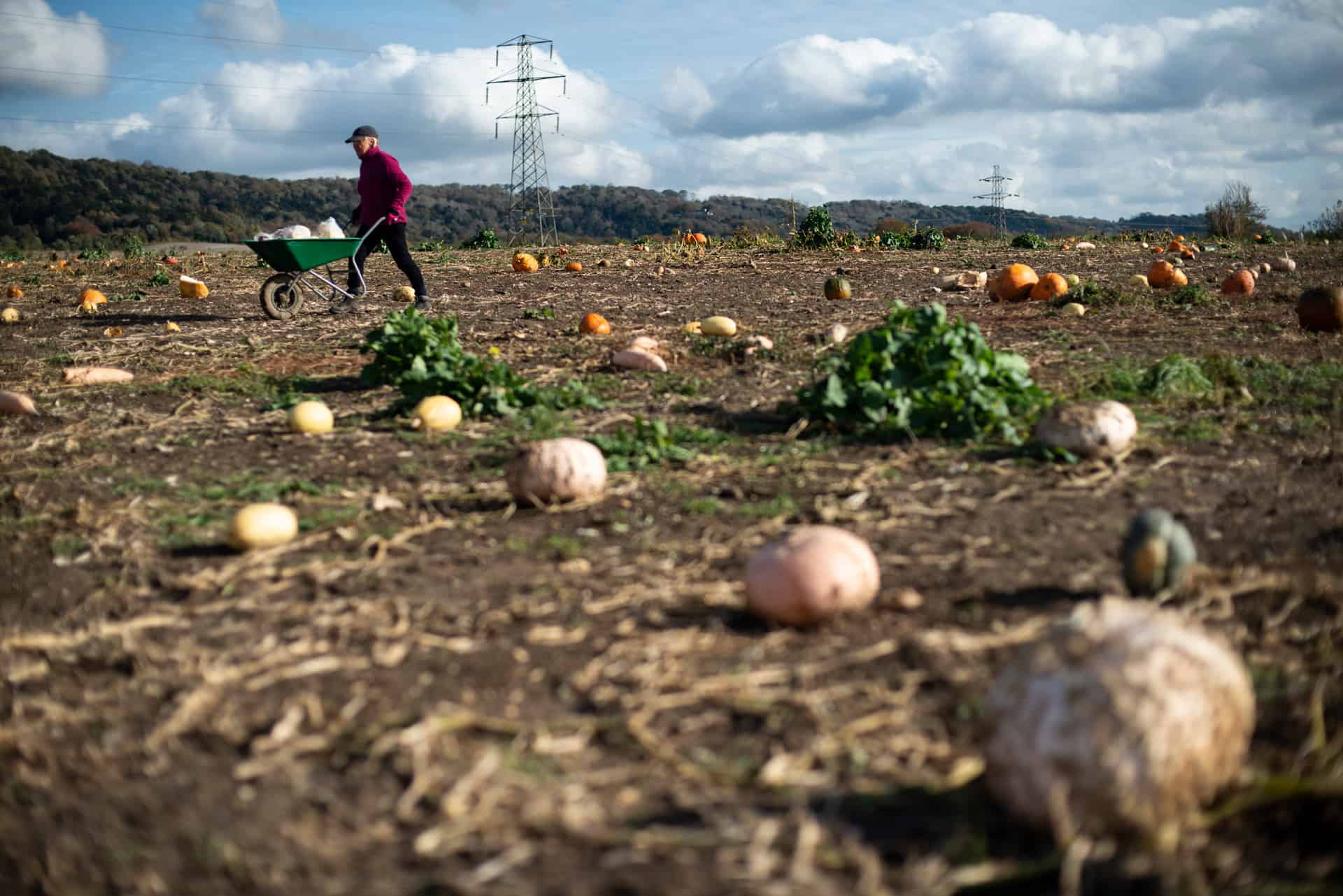 Gleaning pumkins and squashes - Documentary Photography by Chris King for Open Eye Media