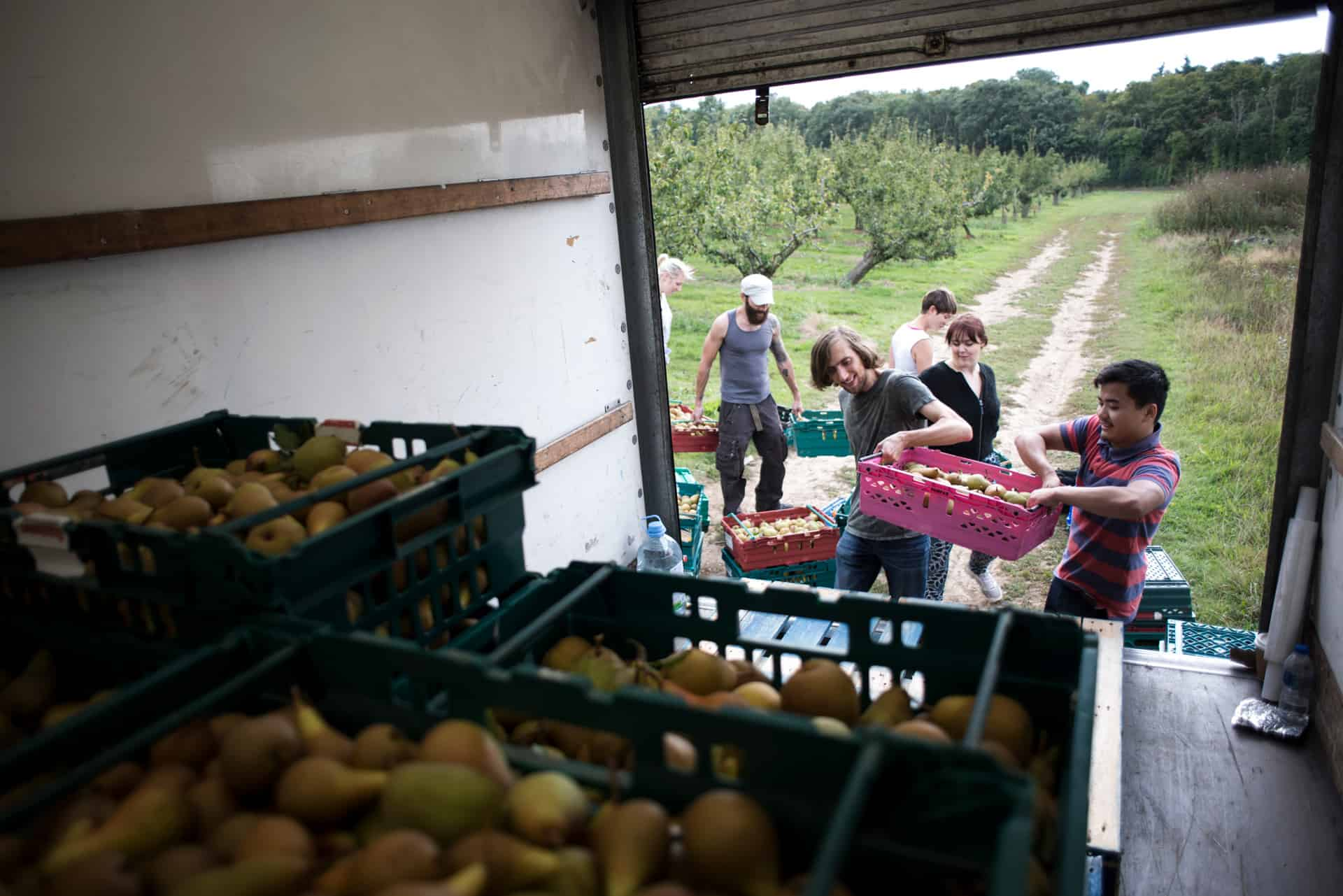 Gleaning pears to reduce farm-level food waste - Documentary Photography by Chris King for Open Eye Media