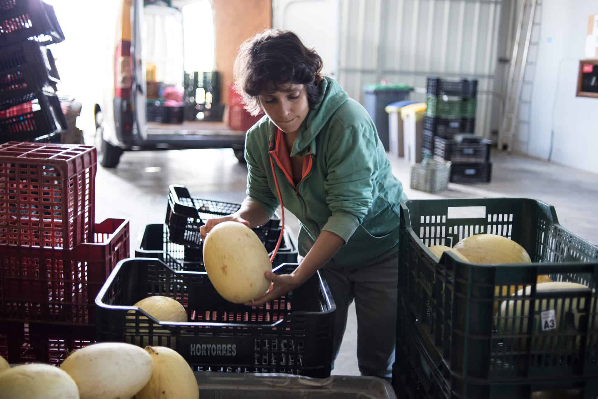 Reducing farm-level food waste - Documentary Photography by Chris King for Open Eye Media
