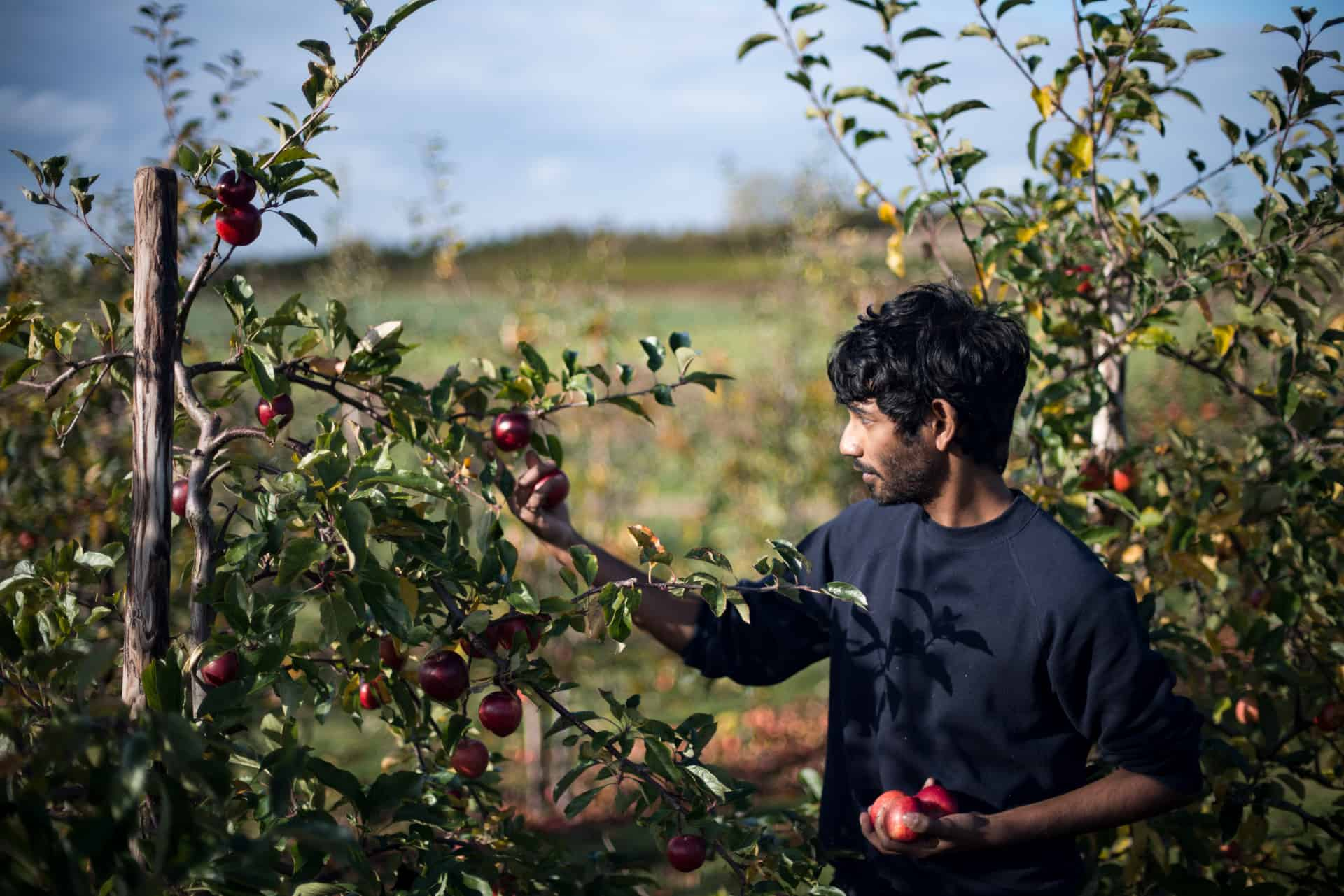 Gleaning to reduce food waste - Documentary Photography by Chris King for Open Eye Media